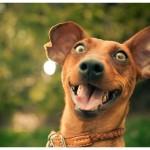 Câinele este cel mai bun prieten al omului! (VIDEO)