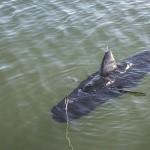 US Navy a prezentat oficial prima dronă-rechin