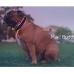 Buddy este cel mai nou și interesant dispozitiv smart pentru câini